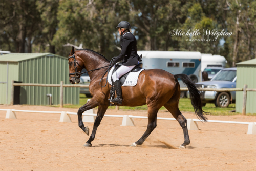 Dardanup dressage event photo with horse and rider in arena