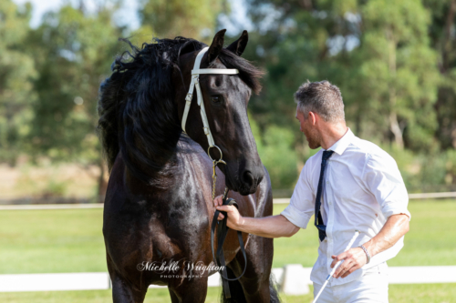 MWP-2019-Friesian-Keuring-Rubriek-5-So-Special-KP-0059