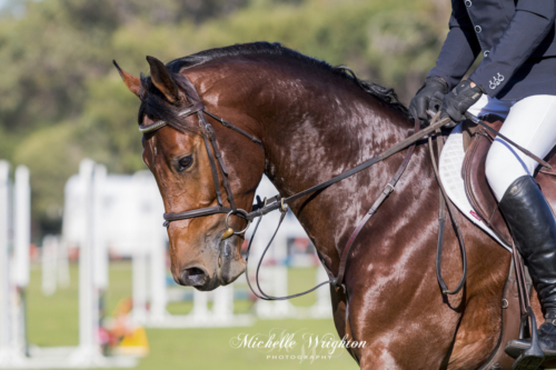 Bunbury Showjumping Classic 80cm horse portrait photo