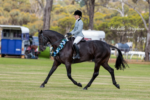 Show horse at the Mount Barker Horse show