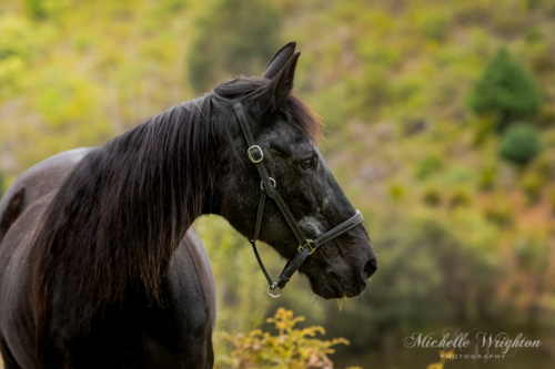 Horse portrait photograph