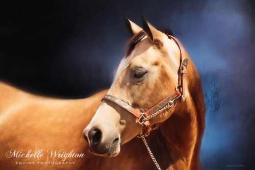 Artistic photo editing  buckskin quarter horse wrighton