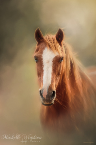 Artistic photo editing chestnut pony